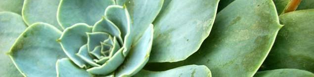 Chácara da Serra – Plantas e Jardins